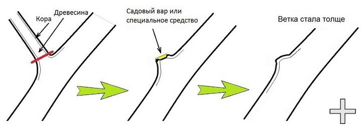 Правильная линия среза