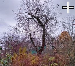 Изображение ошибки садовода - не обрезанного дерева