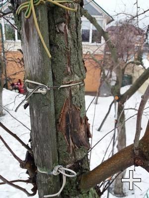 Изображение привязанного к дереву в саду скворечника
