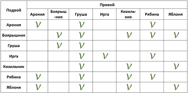 Таблица совместимости привоев и подвоев